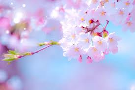 飯田橋、頭、春一番、頭痛、自律神経