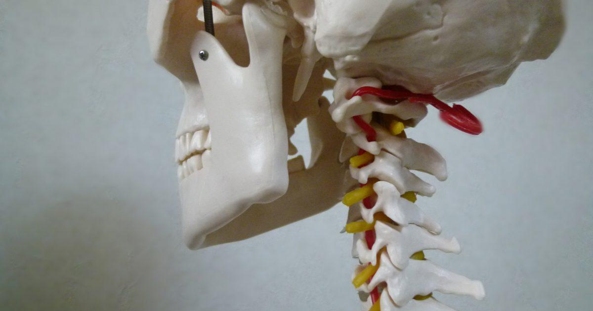 飯田橋、頭、自律神経、原因、脳脊髄液